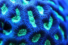 Vibrant Macro Coral Photography: Felix Salazar