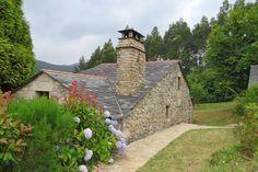 Hortensias en la Galicia Profunda