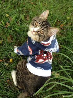 NFL New England Patriots Custom Cat/Dog by GypsyEyesClothing, $35.00  cat clothes maine coon kitten