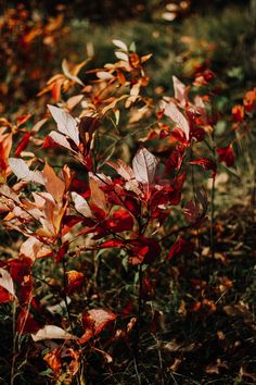 Photo by Taylor Ann Wright on Unsplash October Country, Raindrops And Roses, Autumn Scenes, Autumn Aesthetic, Autumn Cozy, Seasons Of The Year, Autumn Garden, Hello Autumn, Nature Images