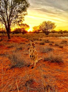 Northern Territory Australia The post Northern Territory Australia appeared first on Gag Dad. Landscape Photography, Nature Photography, Alice Springs, Road Trip, Australian Animals, All Nature, The Beautiful Country, Animals Of The World, Australia Travel