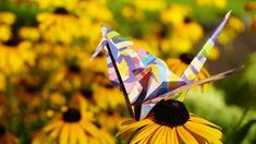 Combining two of my passions, origami and photography. Origami Animals, Paper Folding, Flowers, Plants, Diy, Photography, Craft, Fotografia, Photograph