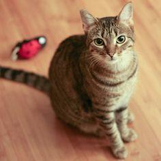 本日の美人猫vol.225 – 猫ジャーナル