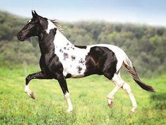 JOGADOR GOLDEN HORSE