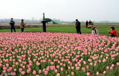 Flowers blooming in villages attract tourists - Chinadaily.com.cn