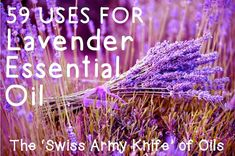 59 Uses for Lavender Essential Oil http://herbsandoilshub.com/59-uses-for-lavender-essential-oil/  Great post with a brief history of lavender, its uses, and and 59 different uses for lavender essential oil (includes recipes)