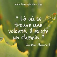 La citation du jour par Winston Churchill #citation #pensée