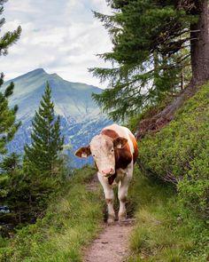5,156 volgers, 286 volgend, 506 berichten - Bekijk Instagram-foto's en -video's van Gasteinertal Tourismus (@visitgastein)