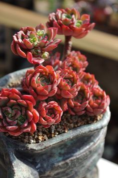 Idea Of Making Plant Pots At Home // Flower Pots From Cement Marbles // Home Decoration Ideas – Top Soop Cacti And Succulents, Planting Succulents, Planting Flowers, Succulent Gardening, Succulent Pots, Suculent Plants, Belle Plante, Succulent Arrangements, Cactus Y Suculentas