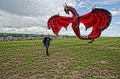dragon kites -