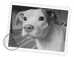 A pet shipping service offering door to door pet transport the latest tweets from pet transport transportpet pet transport companies offering pet sciox Gallery
