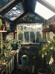 Witchcave greenhouse x