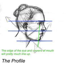Facial Proportions - WetCanvas Doodle Techniques, Facial Proportions, Profile Drawing, Art Basics, Art Drawings, Drawing Portraits, Drawing Art, Art Studies, Drawing People