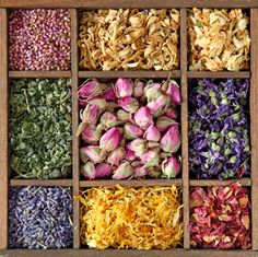 Image detail for -dried-herbs-and-flowers