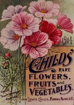 Childs' rare flowers, fruits and vegetables 1914