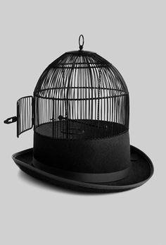 cage hat bird escaped