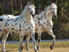 Pair of Speckled horses