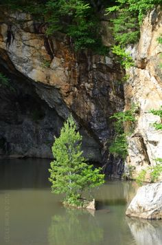 Rock Island Pine Tree     Little Switzerland, NC