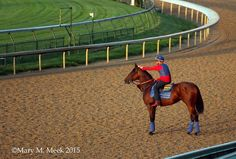 Some peace a quiet with Georgie on the track this morning