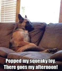 Wicked Training Your German Shepherd Dog Ideas. Mind Blowing Training Your German Shepherd Dog Ideas. Funny Baby Memes, Funny Animal Memes, Funny Babies, Funny Dogs, Funny Animals, Cat Memes, Hilarious Sayings, Baby Humor, Funny Quotes