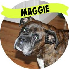 Maggie has hit the jackpot and found her furever home and family!!