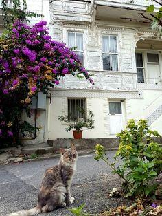 Heybeliada -İstanbul by Emine Önder Köroğlu What Is Art Therapy, Southwestern Art, Curious Cat, Dream City, Italian Art, Photography Photos, Beautiful Babies, Kitten, Architecture