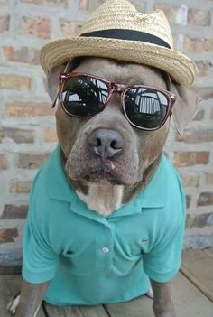 26 Reasons Pit Bulls Were The Most Dangerous Animal In 2015