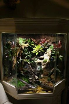 Need a gift ideas for cooks? ✩ Check out this list of creative present ideas for people who are into cooking Reptile House, Reptile Habitat, Reptile Room, Tree Frog Terrarium, Snake Terrarium, Terrarium Diy, Paludarium, Reptile Enclosure, Reptiles And Amphibians