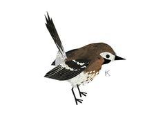 Birds - Pandagun