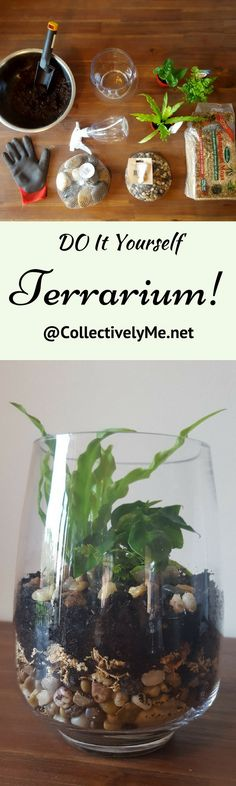 Create your own Fantastic Terrariums to make your home all the more stunning! They are so easy to make and fun to boot! Check it out @CollectivelyMe.net