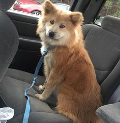 Found Dog - Unknown - Lawrenceville, GA, United States 30044 on February 09, 2016 (15:30 PM)