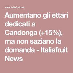 Aumentano gli ettari dedicati a Candonga (+15%), ma non saziano la domanda - Italiafruit News