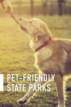 Top Pet-Friendly State Parks