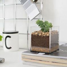 This modern acrylic terrarium is a great way to add some greenery to your desk!