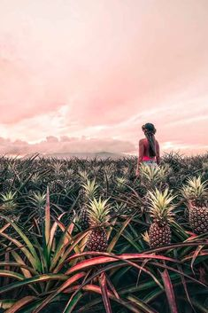 Top 18 Exciting Things To Do In Maui For A Perfect Holiday Visit A Working Pineapple Plantation ★ ★ Here are some top best things to do in Maui that will be not only be fun and romantic but will also be suitab. Honeymoon Vacations, Hawaii Honeymoon, Romantic Vacations, Hawaii Vacation, Romantic Getaways, Vacation Destinations, Vacation Trips, Maui Travel