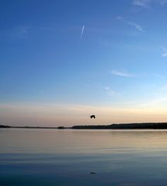 Bird Flying over the Rideau Lakes