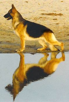 GSD reflection