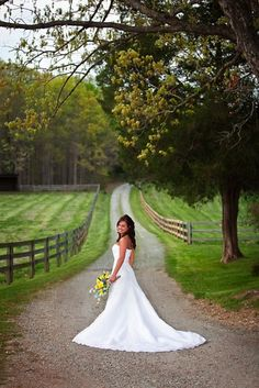 Timber line barn drive photo idea--makes me think about a vineyard wedding