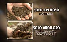 Agrônomo explica qual o melhor solo para plantar banana