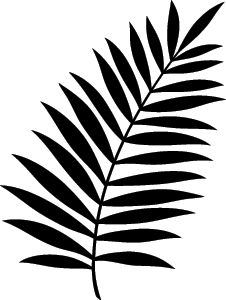 palm frond clip art free transparent background this is a more rh pinterest com fern leaves clipart clipart fern leaf