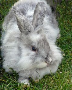 This cute bunny was at the Petting Zone --------annual Citadel Stampede Breakfast