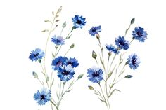 Draw Flower Patterns Blue Cornflower Flower Bouquet Illustration Pattern Isolated Royalty Free Cliparts, Vectors, And Stock Illustration. Image - - Millions of Creative Stock Photos, Vectors, Videos and Music Files For Your Inspiration and Projects. Watercolor Drawing, Watercolor Pattern, Watercolor Flowers, Watercolor Paintings, Watercolor Tattoos, Tribal Pattern Tattoos, Zealand Tattoo, Plant Drawing, Flower Tattoo Designs