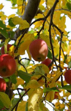 Plant a fruit tree, any variety will provide you with delicious fruit. Even in a small garden, dwarf fruit trees  can be planted.