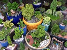 Winterizing your Miniature Garden and Containers