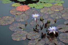 Brooklyn Botanical Gardens- Simply Glorious