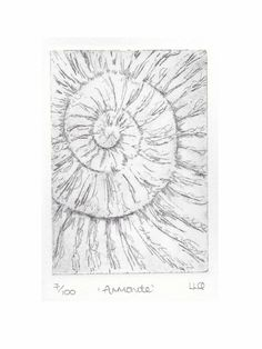 Etching no.7 of an ammonite fossil in an edition of 100 £30.00