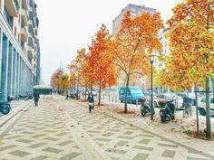 Il mio #autunno a #Milano... Pieno di #colori!!! Una de las estaciones mas hermosas en #Milán es el otoño y sus árboles llenos de #colores!!!I  | Sabrina Delgado | VSCO Grid™