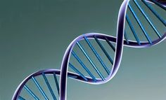 By Ryah Nabielski, MS, RDN You may have heard of methylation and MTHFR recently as the branch of medicine called nutrigenomics becomes more researched and understood.Nutrigenomics is the study of how food and nutrients influences gene expression, or Natural Frequency, Diabetes Tipo 1, Nucleic Acid, Dna Test, Autoimmune Disease, Autoimmune Paleo, Genetics, Inventions, Blog