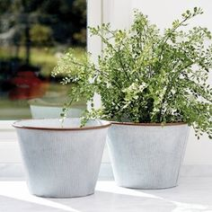 This Maiden Hair Tree in Pot has a root ball which is provided so you can easily pick the perfect vase or pot. Embellish with faux moss or stand them on their own to show-off the root structure. Ivy Plants, Large Plants, Faux Plants, Palm Plant, Fern Plant, Potted Trees, Trees To Plant, Ceramic Planters, Planter Pots