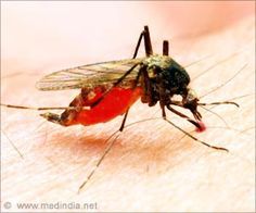The first person in the United States, a Florida man who has not recently traveled outside the country, is reported to be infected with the mosquito-borne chikungunya virus locally.